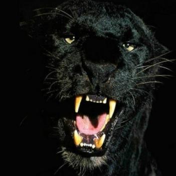 Paul Jaguar