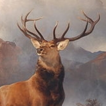 Stag RedStag