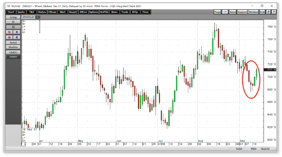 Wheat Daily