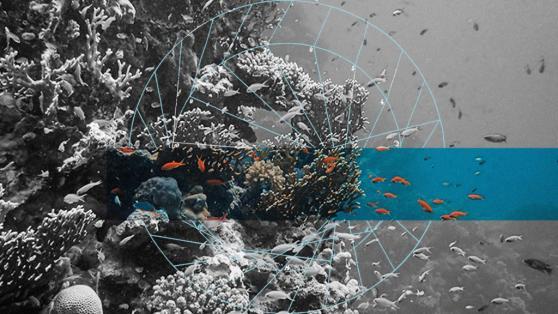 Reef (REEF): Recent Developments, Community, Future Events