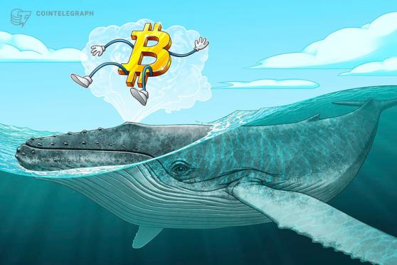 'Millionaire' whales gobble up 90,000 Bitcoin over past 25 days