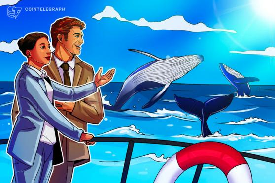 New Bitcoin entities near all-time high as analyst heralds 'positive whale activity'